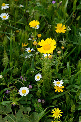 Photograph - Wildflowers by Michael Goyberg
