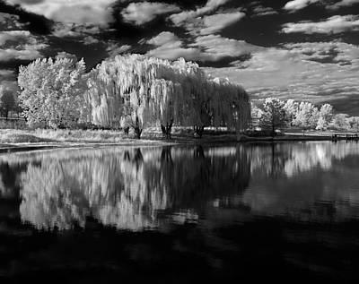 Willow Lake Photograph - Willow Trees by Bob Nardi