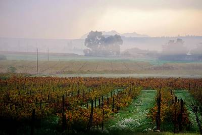 Art Print featuring the photograph Wine Field by Werner Lehmann