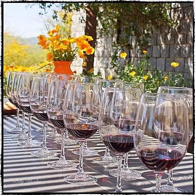 Vineyard Photograph - Wine Tasting At Kingston Vineyard by Polly Rhodes