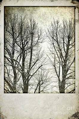Photograph - Winter Trees by Silvia Ganora