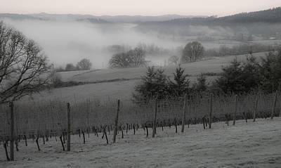 Winter Vineyard Art Print by Jean Noren