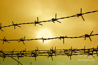 Wire Fence Art Print by Antoni Halim