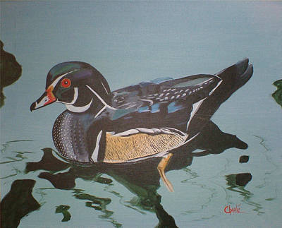 Wood Duck Painting - Wood Duck by Charlie Brown
