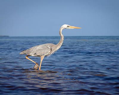 Photograph - Wurdemann's Heron by Scott Meyer