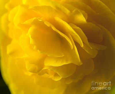 Photograph - Yellow Beauty by Jeannette Hunt