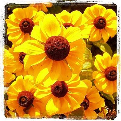 Yellow Wall Art - Photograph - Yellow Flowers by Luisa Azzolini