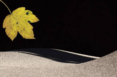 Photograph - Yellow Leaf by Michael Mogensen