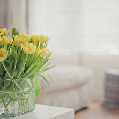 Y120817 Photograph - Yellow Tulips by Cindy Prins