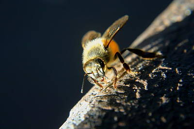 Photograph - Yet Another Bee by Scott Brown
