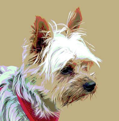 Yorkshire Terrier Art Print by Dorrie Pelzer