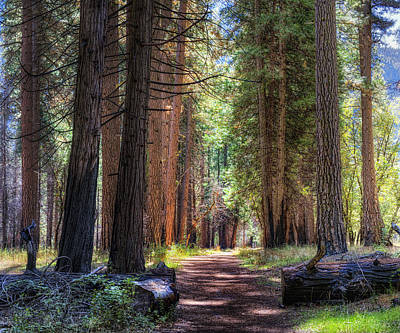 Yosemite Trail Art Print