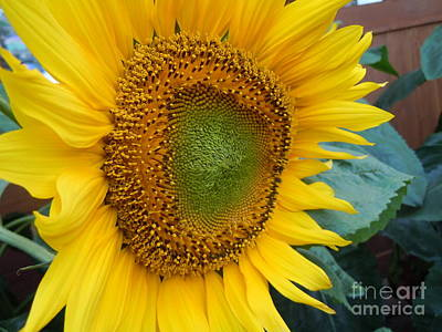 Yello Painting - You Are My Sunshine by Lam Lam