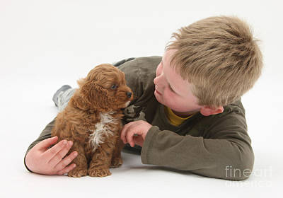 House Pet Photograph - Young Boy With Cockerpoo Pup by Mark Taylor