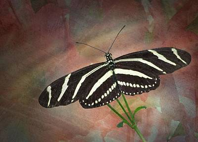 Photograph - Zebra Longwing  Butterfly-2 by Rudy Umans