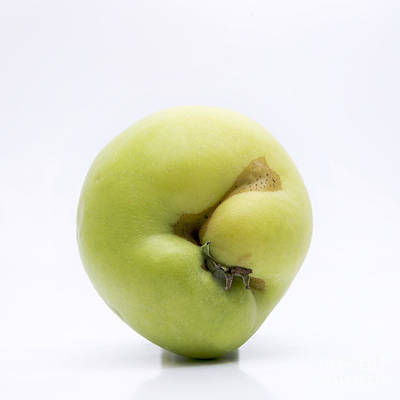 Hymenopteran Insect Photograph - Apple by Bernard Jaubert
