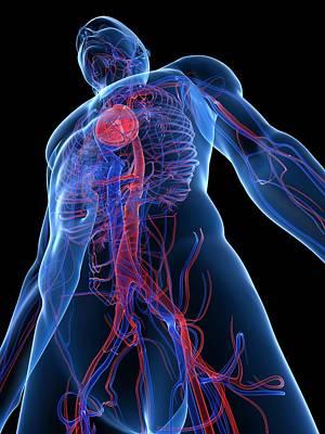 Cardiovascular System, Artwork Art Print by Sciepro