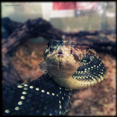 Reptiles Wall Art - Photograph - #iphoneonly #igersbrasil #instagood by Rodrigo Portugal