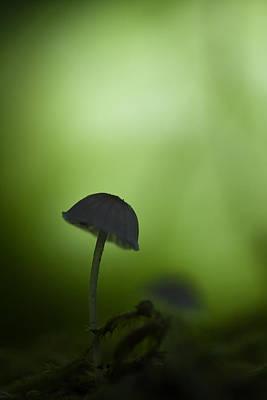 Olympic Sports - Mushroom by Odon Czintos