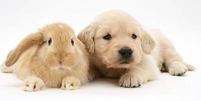 Rabbit And Puppy Print by Jane Burton
