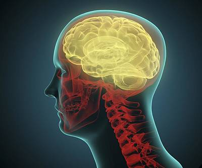 Human Brain Digital Art - Human Brain, Artwork by Andrzej Wojcicki
