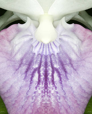 Flora Photograph - Orchid Flower Bloom by C Ribet