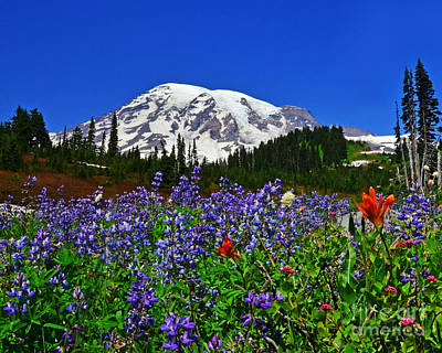 Photograph - #12-1 Wildflowers At Paradise by Jack Moskovita