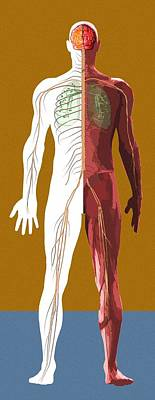 Human Anatomy, Artwork Art Print by Mehau Kulyk