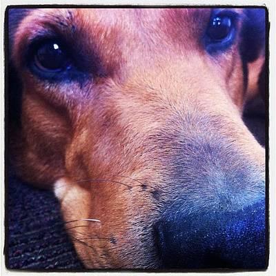 Iphone 4s Photograph - #instagramhub #instacool #instapopular by Maya Steinberg