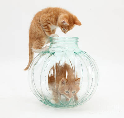 Photograph - Kittens by Mark Taylor
