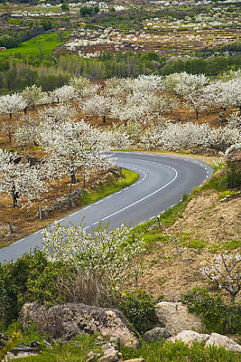 Cherry Blossoms Road Photograph - Spring Landscape In The Jerte Valley by Gonzalo Azumendi