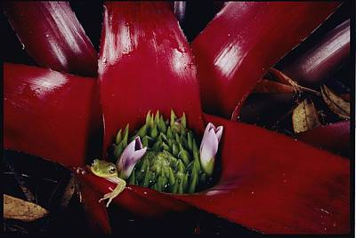 Neoregelia Photograph - Untitled by Paul Zahl