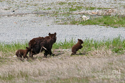 Advertising Archives - Black Bear Family by Carol Ailles