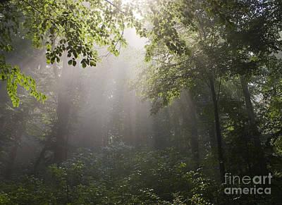 Polaroid Camera - Forest by Odon Czintos