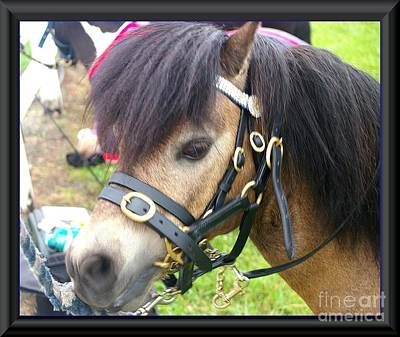 Photograph - Horse by James  Dierker