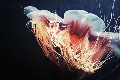 Lion's Mane Jellyfish Art Print by Alexander Semenov
