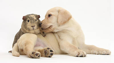 Puppy And Guinea Pig Art Print by Mark Taylor