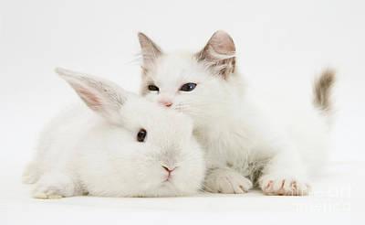 Rabbit And Kitten Print by Jane Burton