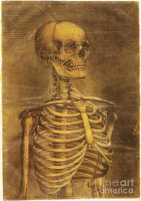 Photograph - Anatomie Generale Des Visceres by Science Source