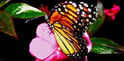 Butterfly Collection  Art Print by Debra     Vatalaro