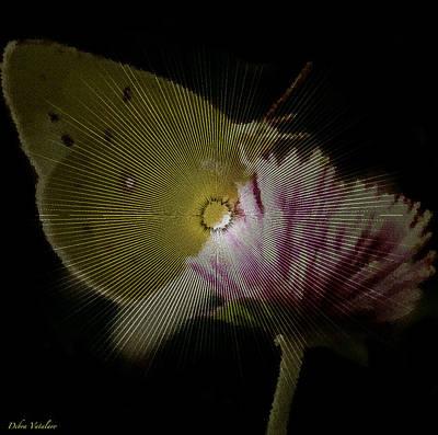 Butterfly Collection Design Art Print by Debra     Vatalaro
