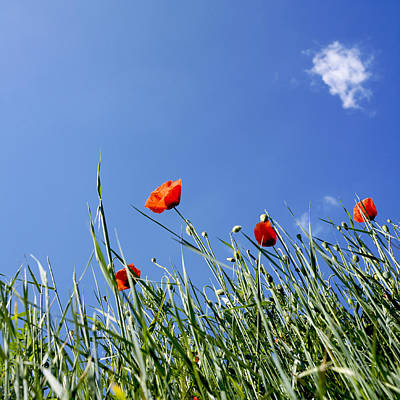 Scenic View In France Photograph - Field Of Poppies by Bernard Jaubert