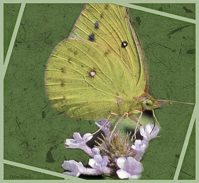 Photograph - Butterfly Collection Design by Debra     Vatalaro