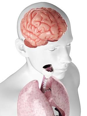 Headache Digital Art - Human Brain, Artwork by Sciepro