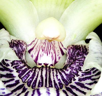 Orchid Flower Bloom Art Print by C Ribet