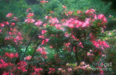 152-3 Rhododendrons-pink-blooming Art Print