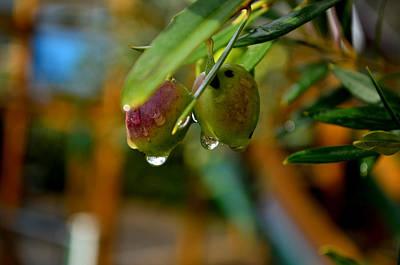 Photograph - Drops by Barbara Walsh