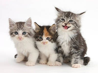 Of Cats Photograph - Kittens by Mark Taylor