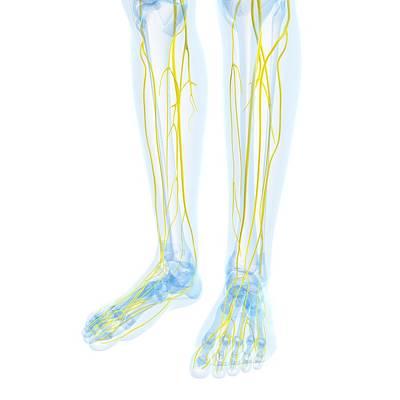 Human Joint Digital Art - Nervous System, Artwork by Sciepro