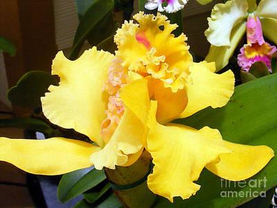 Digital Art - Orchid by Vicky Tarcau